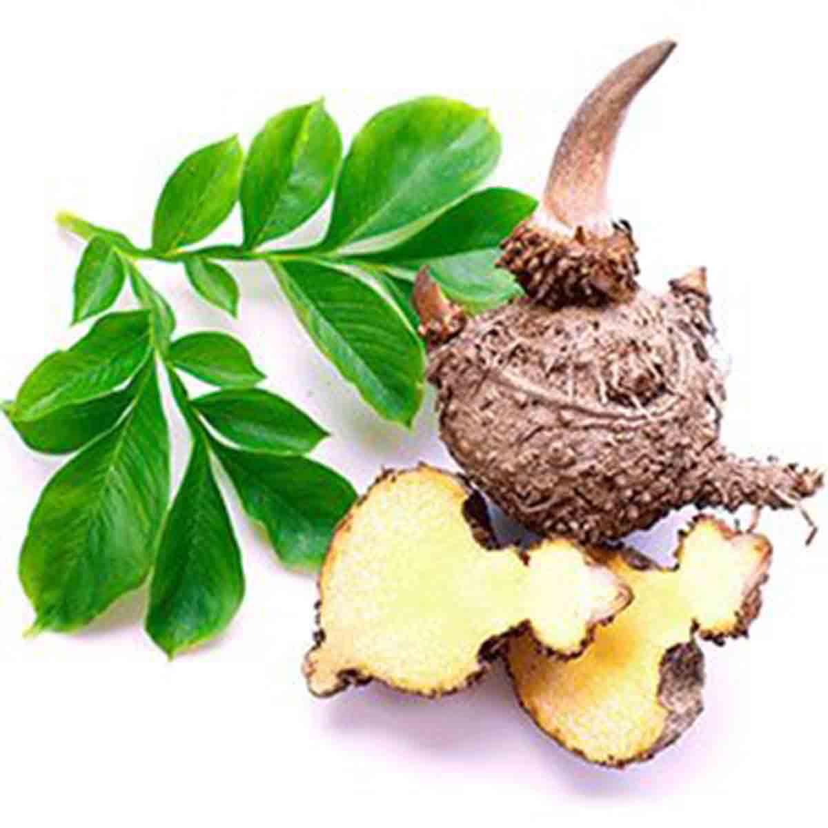 How to Avoid Buying Fake Glucomannan - Konjac Root