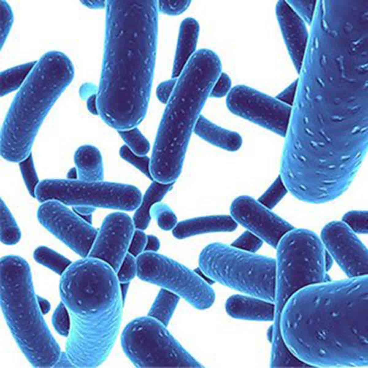 Are Probiotics And Prebiotics Important For Health?